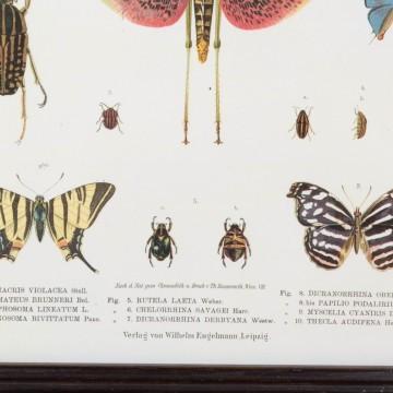 Lámina científica con insectos