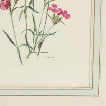Lámina botánica, clavelinas