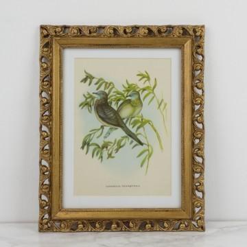 Lámina de pájaros sobre rama