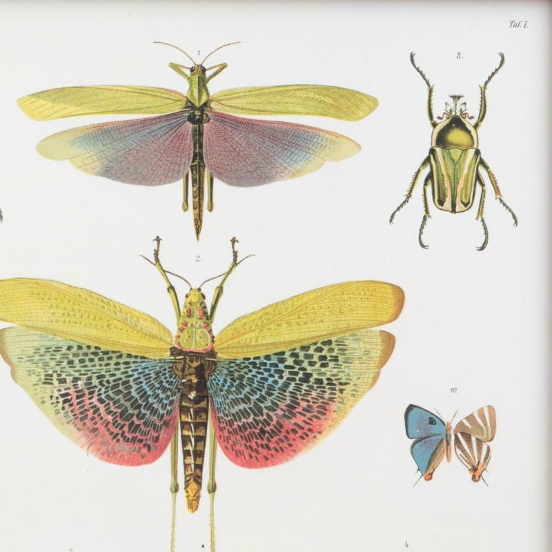 Lámina científica con insectos | Flora y fauna | Láminas y litografías