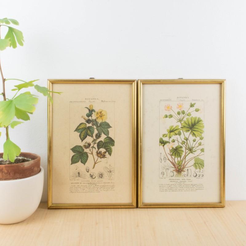 Pareja de láminas botánicas antiguas | Flora y fauna | Láminas y ...